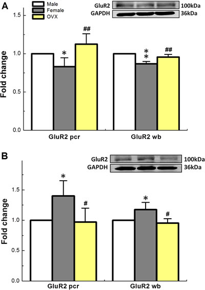 Sex-specific difference in expression profiles (fold change) of mRNA and protein for GluR2 receptor, one of subtypes of AMPA family, in NTS
