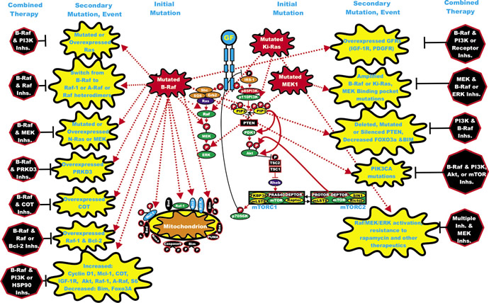 Rationale for Targeting Both the Ras/Raf/MEK/ERK and Ras/PI3K/PTEN/Akt/mTOR Pathways for Suppressing Inhibitor Resistant Cells.