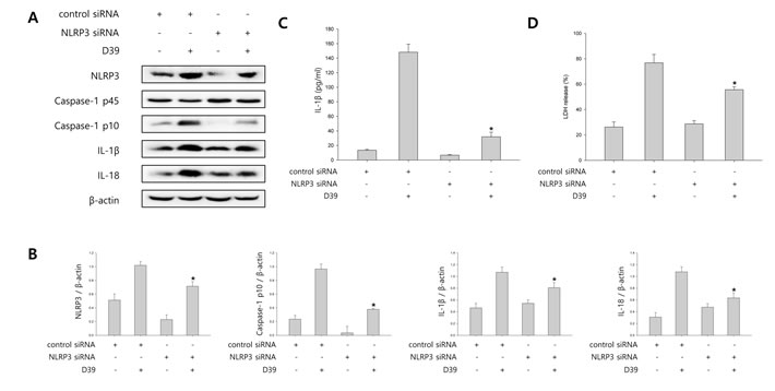 NLRP3 inflammasome is involved in