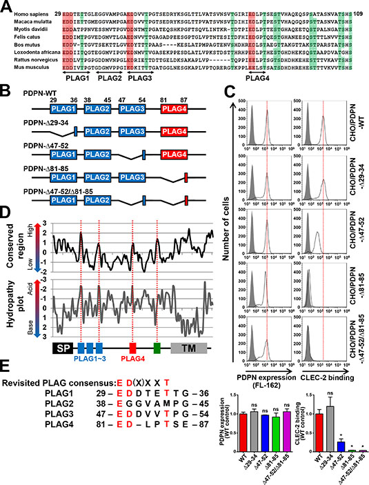 Identification of a new CLEC-2-binding domain, PLAG4, highly conserved in mammals.