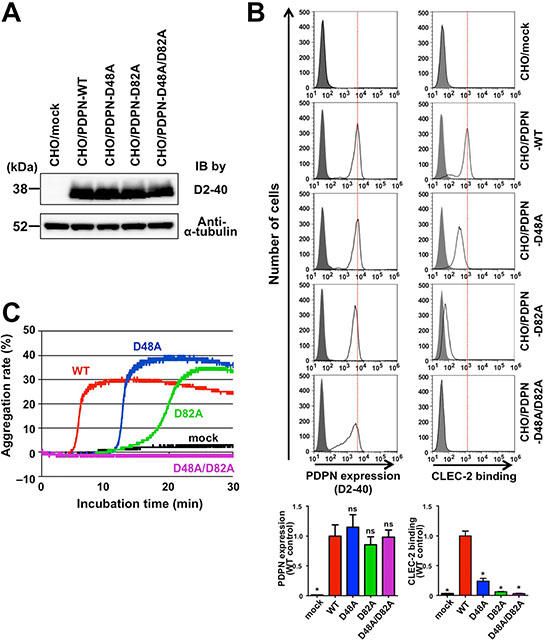 Involvement of PLAG4 domain in CLEC-2 binding and platelet aggregation.