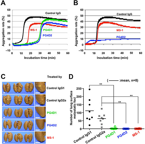 Inhibition of podoplanin-mediated platelet aggregation and pulmonary metastasis by anti-PLAG4 mAbs PG4D1 and PG4D2.