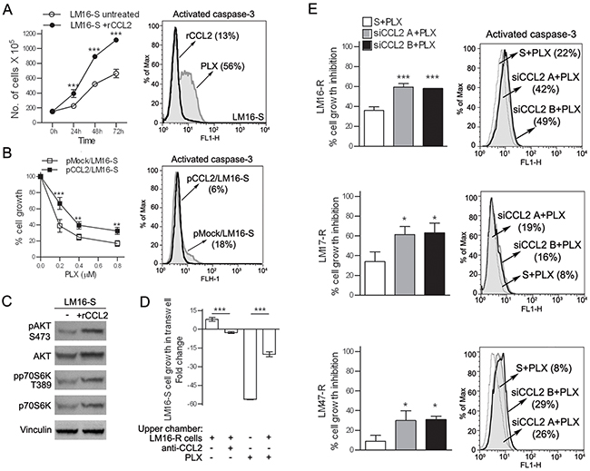 CCL2 acts as an autocrine factor for melanoma cells.