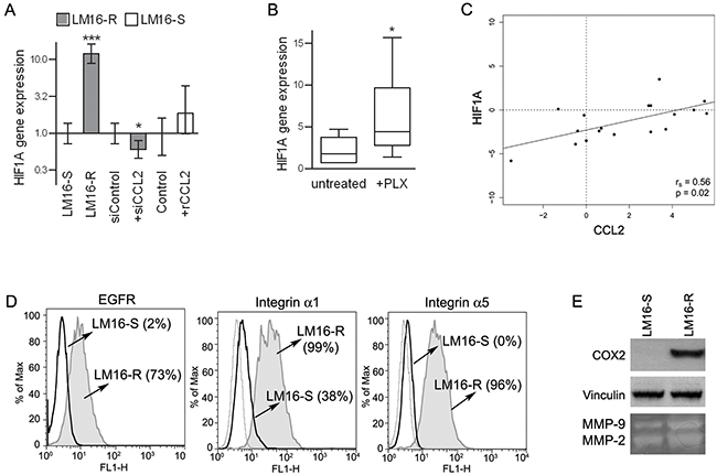 Concerted HIF1A and CCL2 regulation.