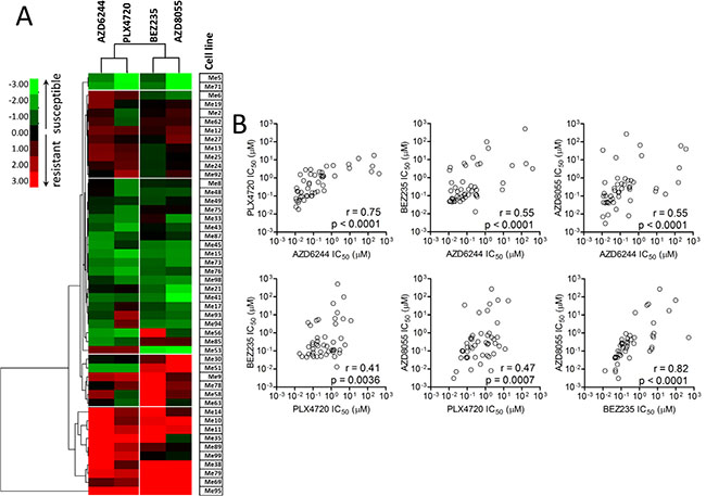 Responsiveness profiles of BRAF-mutant human melanoma cell lines to BRAFV600E-, MEK1/2-, and PI3K/mTOR-specific inhibitors are significantly correlated.