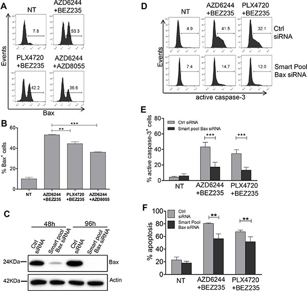 Role of Bax upregulation, by combinatorial treatments, in caspase-3 activation and melanoma apoptosis.