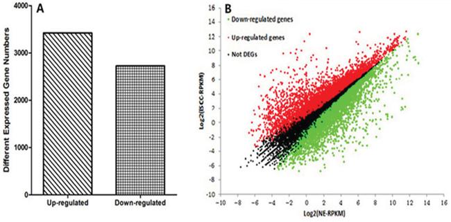 Whole genome expression profiles.