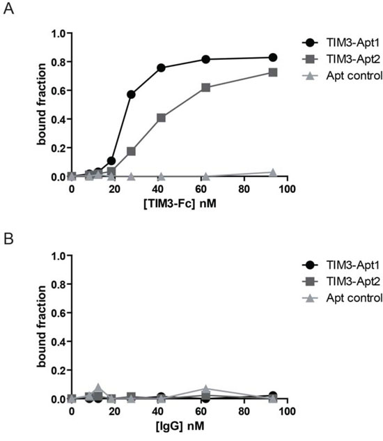 Binding of the two most abundant TIM3 aptamers to the mouse recombinant protein TIM3.