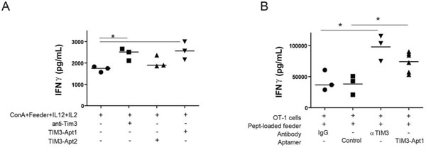 TIM3-Apt1 antagonizing aptamer boosts IFN-γ production in CD8 lymphocytes.