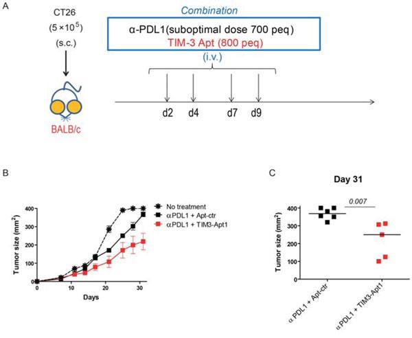 TIM3-Apt1 antagonizing aptamer enhances tumor-bearing mice in combination with PDL1 blockade.
