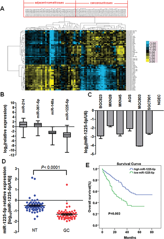 Downregulation of miR-1225-5p in gastric carcinoma (GC), which is associated with poor prognosis.