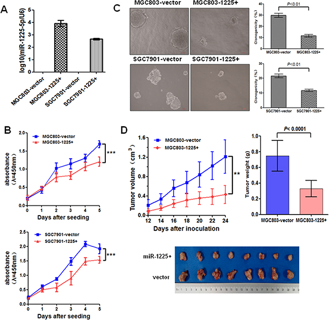 miR-1225-5p suppresses GC cell growth.
