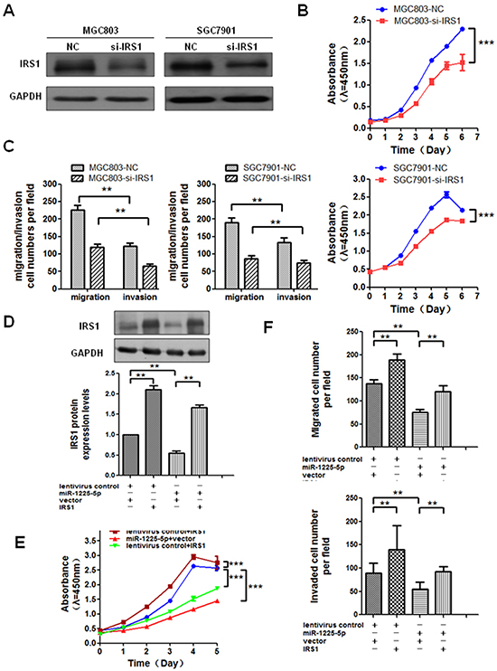 Enhanced expression of IRS1 reverses the effect of miR-1225-5p.