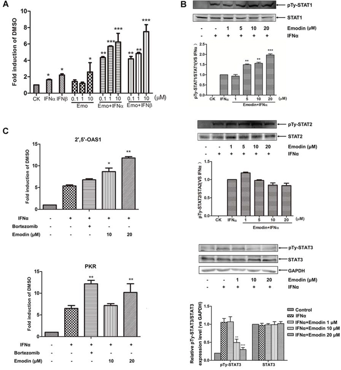 Figure 5. Emodin enhances IFN-α/β-induced JAK/STAT pathway activation.