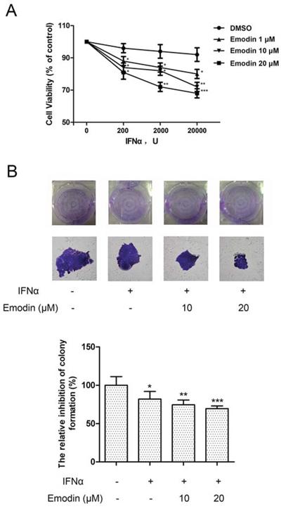Figure 7. Emodin potentiates the antiproliferative effect of IFN-α.