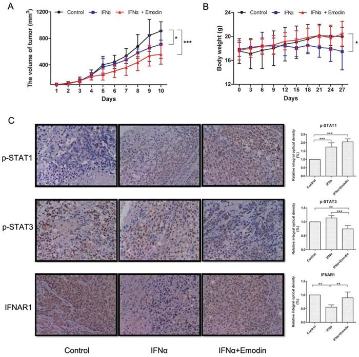 Figure 8. Emodin promotes the antiproliferative effect of IFN-α in vivo.