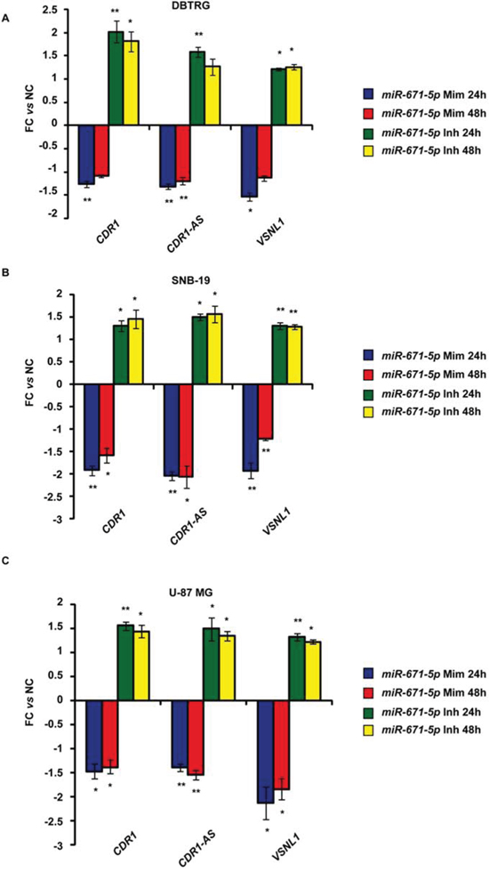 Expression of CDR1-AS, CDR1, VSNL1 in DBTRG, SNB-19, U-87 MG cell lines after transfection with miR-671-5p mimics (miR-671-5p Mim) or inhibitors (miR-671-5p Inh).