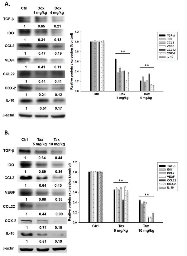 Immunosuppressive factors and cells were suppressed