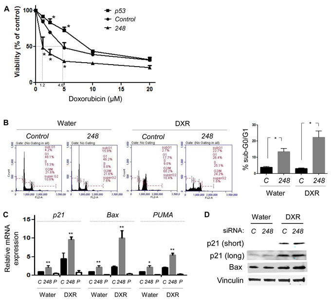 Allele-specific silencing of mutp53 increases doxorubicin sensitivity by restoration of wtp53 activity.