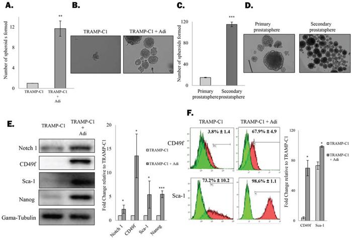 Figure 1. Adipocytes promote prostate CSC self-renewal