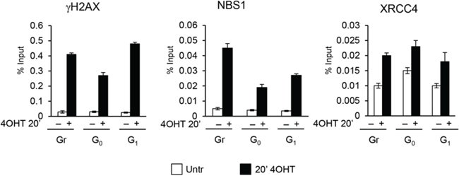 ChIP analysis with γH2AX, NBS1 and XRCC4 antibodies in MFC10AsiSI-ER cells after a short pulse of 4OHT treatment (20').