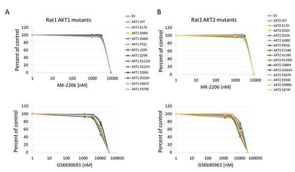 Sensitivity of Rat1a cells expressing Akt mutants to allosteric and kinase inhibitors.