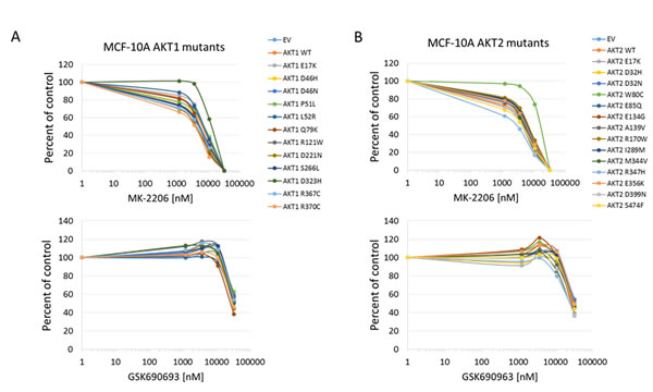 Sensitivity of MCF-10A cells expressing Akt mutants to allosteric and kinase inhibitors.