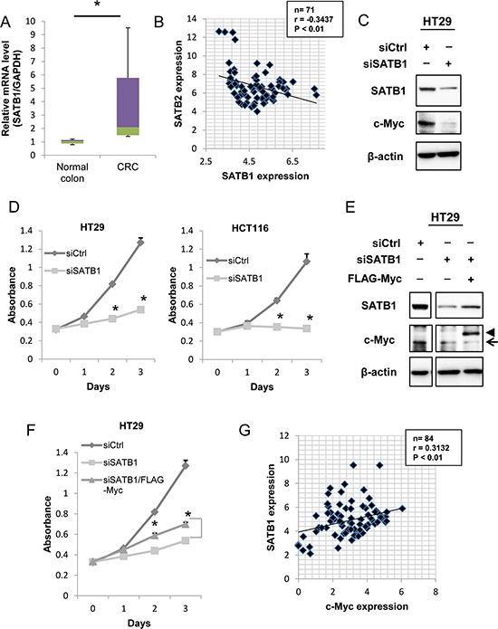 Depletion of SATB1 inhibits cancer cell proliferation in vitro.