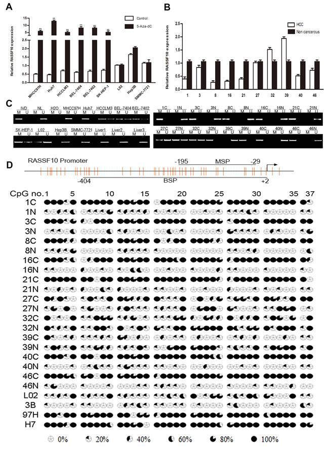 Downregulation of RASSF10 by promoter hypermethylation.