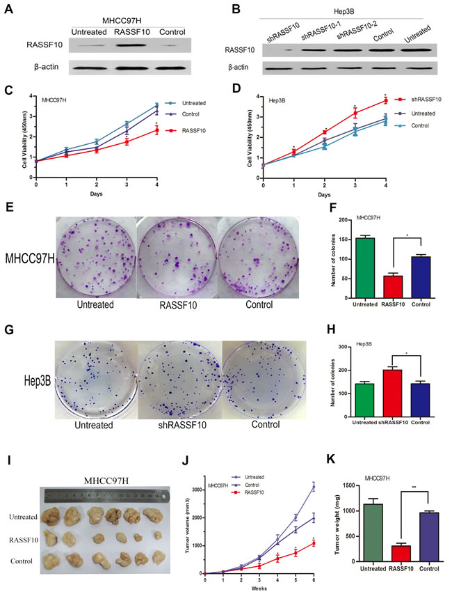 Function of RASSF10 as a tumor suppressor