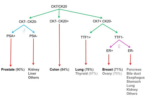 Minimal set of markers for carcinoma identification.