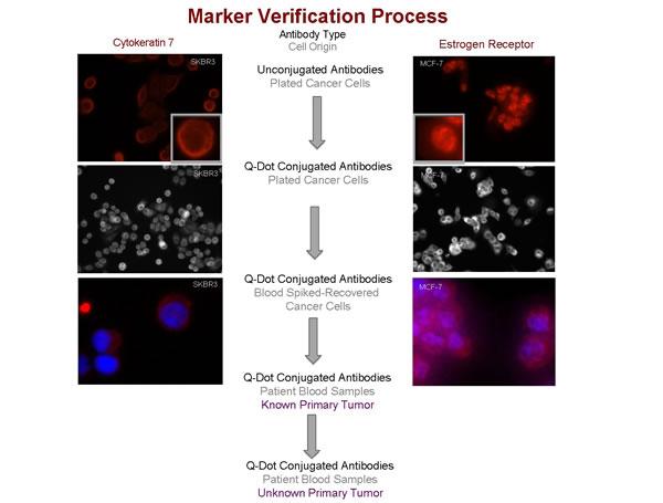 Marker validation process.