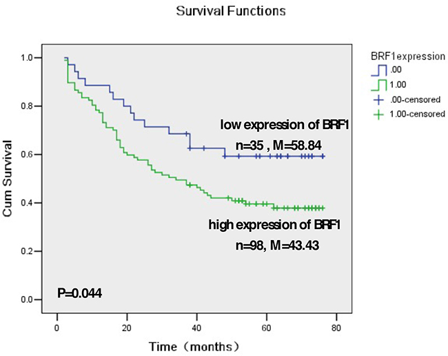 Kaplan-Meier survival curve and log-rank test analysis of the association between Brf1 expression and HCC patient survival.