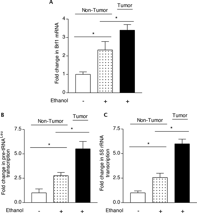 Transcription of Brf1 and Pol III genes in chronic alcohol administration in mice.