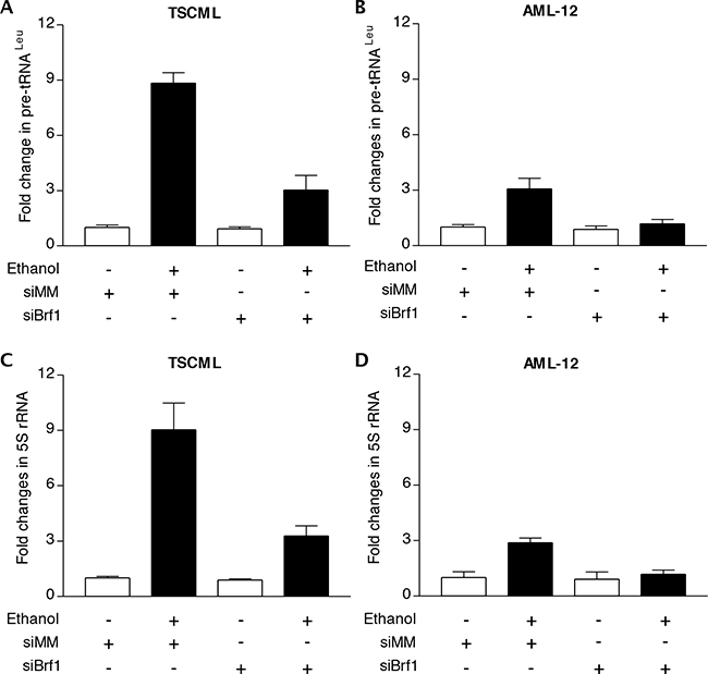 Repression of Brf1 decreases the induction of Pol III genes caused by alcohol.