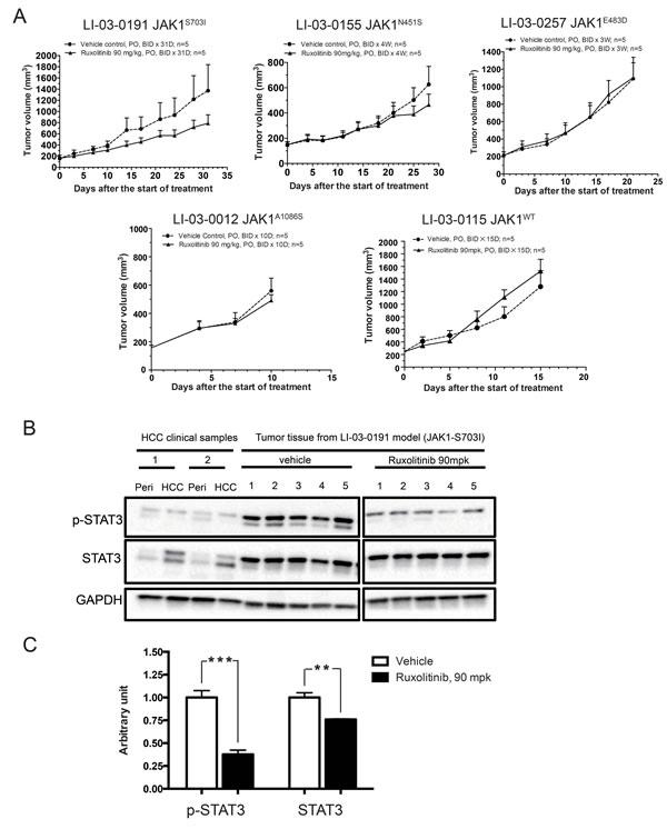 Anti-tumor efficacy of ruxolitinib in