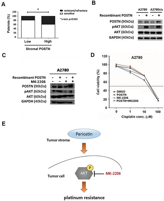 POSTN induces platinum resistance via PI3K/AKT pathway.