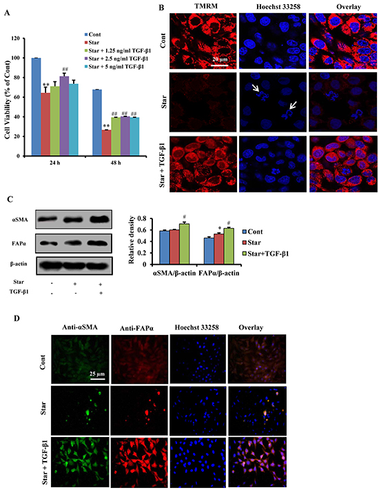 TGF-β1 exerted protective effects and induced formation of CAFs phenotype in Star-treated NIH3T3 fibroblasts.