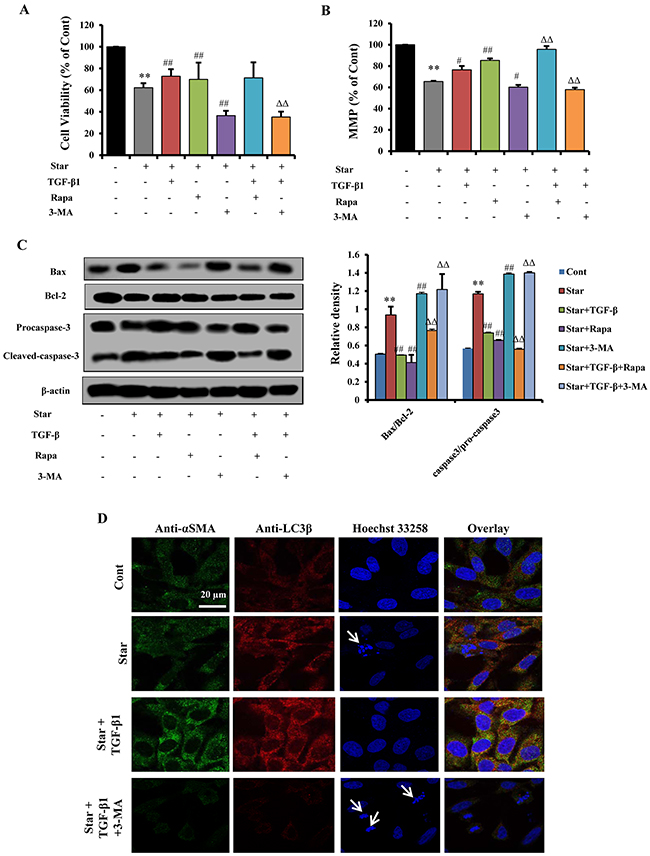 Autophagy was involved in TGF-β1-induced protection and CAFs phenotype formation in Star-treated NIH3T3 fibroblasts.