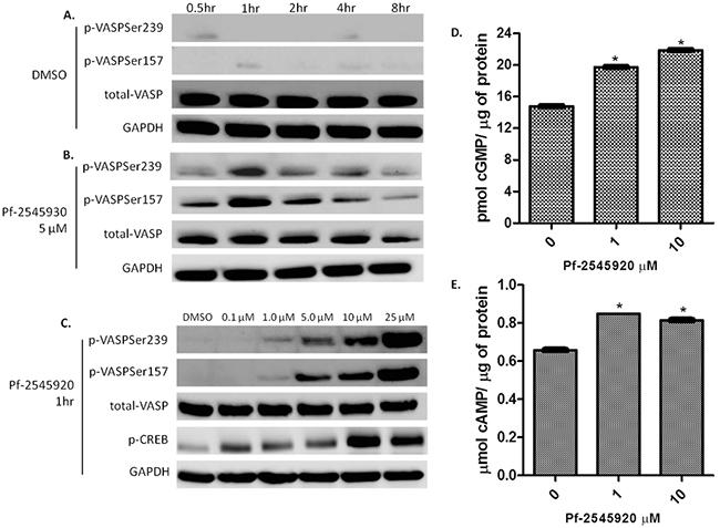 PDE10 inhibitors induce downstream kinase signaling.