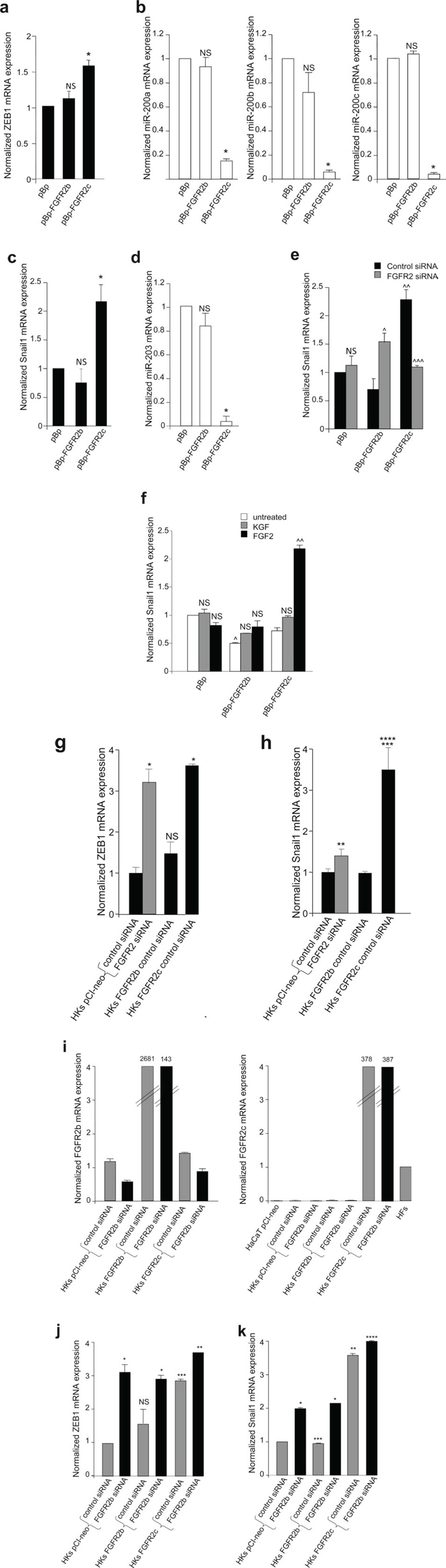 FGFR2c expression and signaling unbalance the transcription factors involved in EMT and their related miRs.