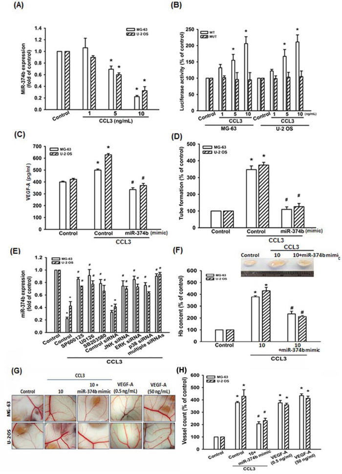 CCL3 promotes VEGF-A expression and angiogenesis by downregulating miR-374b.