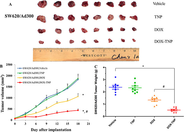 The effect of DOX, TNP and DOX-TNP on the growth of SW620/Ad300 tumors in nude athymic mice.