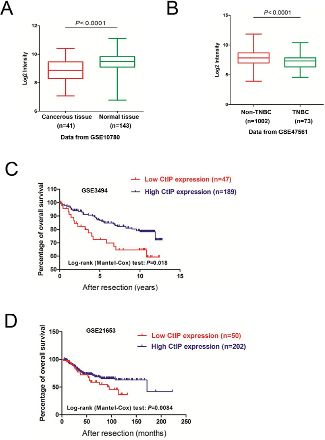 The expression of CtIP is decreased in human breast cancers.