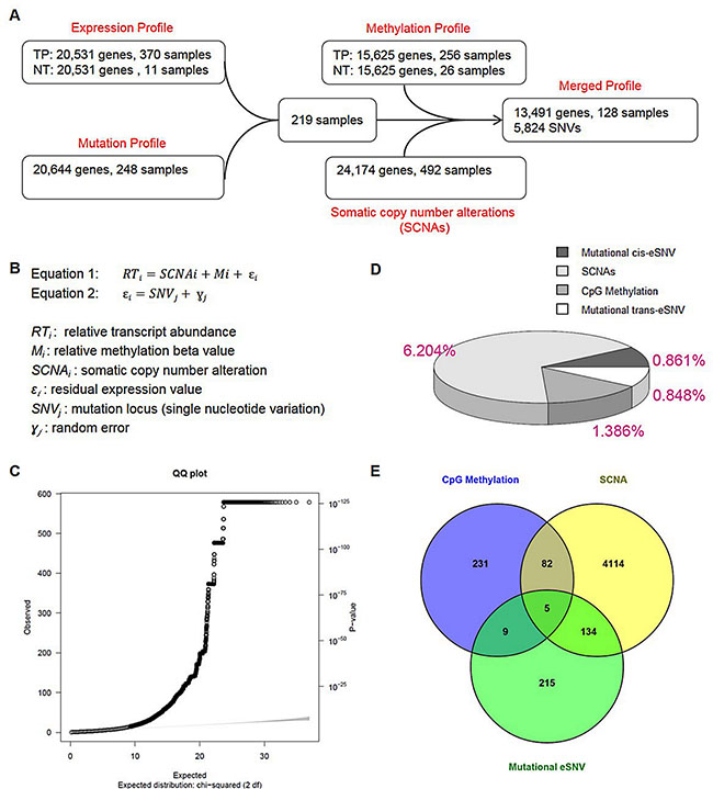 Correlation between somatic mutations and transcripts in endometrial cancers.
