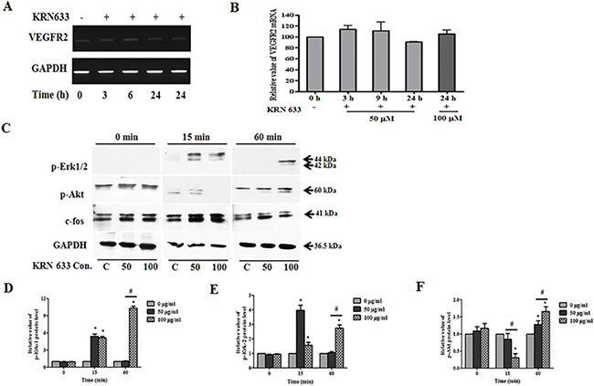Alteration of VEGF/VEGFR2 signaling-related RNA and protein expression in stem cells following treatment with the vascular endothelial growth factor receptor 2 (VEGFR2) inhibitor, KRN633.