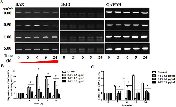 Effect of 5-fluorouracil (5-FU) on expression or apoptosis associated marker in MDA-MB-231 cells.