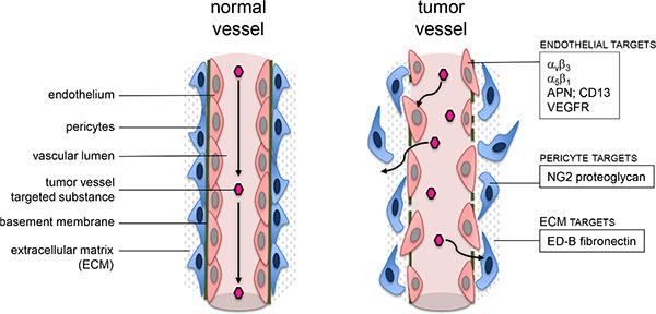 Schematic visualization of possible targets close to a tumor vessel wall.