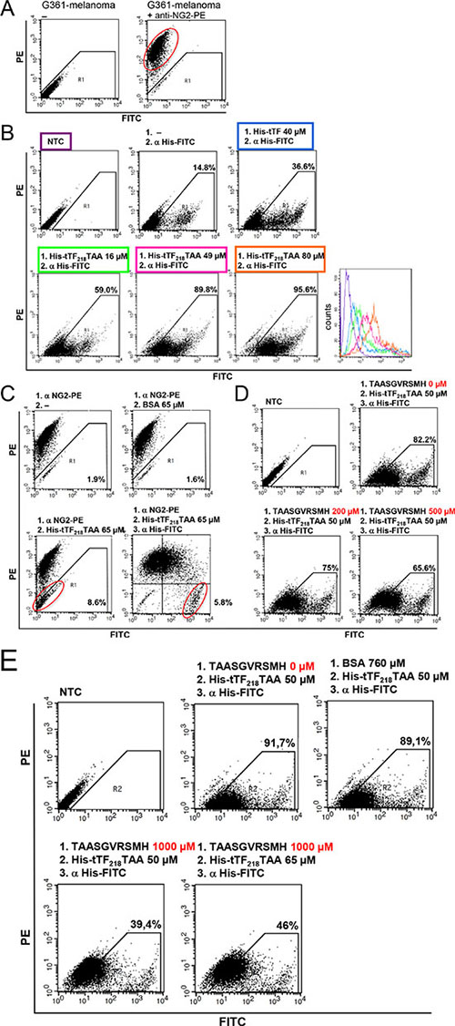 Binding of tTF218-TAA to human G361-melanoma cells as measured by flow cytometry.