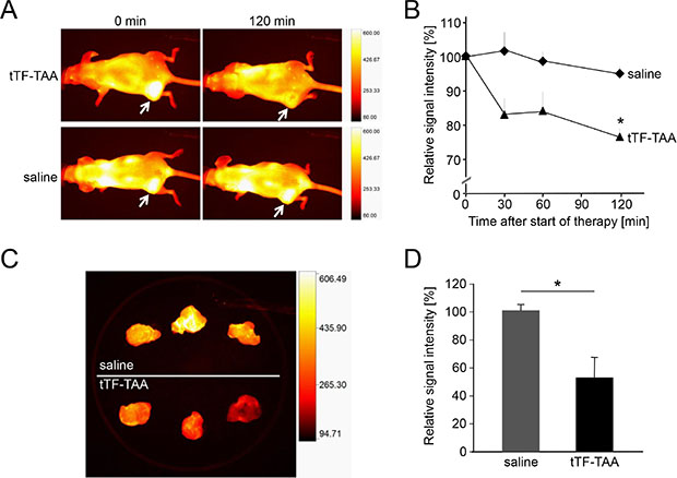 Treatment with NG2-targeting tTF218-TAA in vivo and ex vivo as monitored by fluorescence reflectance imaging (FRI).